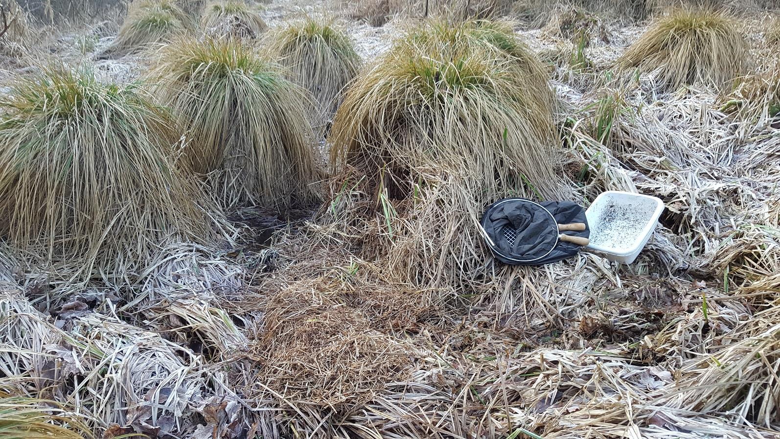 Sigtning af materiale fra star-tuer ved Jeksen en kølig vinterdag 2017. Det gav blandt andet arterne Skæv Vindelsnegl (ny lokalitet for arten), Philotelma nigripenne (meget sjælden vandflue) og Scydmoraphes helvolus (sjælden rovbille)